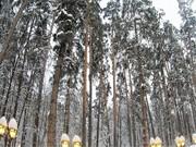 Квартира с панорамными окнами и видом на лес Рублевское шоссе, Купить квартиру в новостройке от застройщика Усово, Одинцовский район, ID объекта - 325145417 - Фото 8
