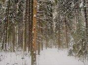 Участок 15 соток с лесными деревьями. Дарна - Фото 3