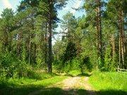 Лесной уч-к 1 Га в первозданной природе. 60 км от МКАД, Наро-Фоминск - Фото 1