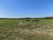 Участок ЛПХ 5,47 га у реки Волга, дер. Алексино, Калязинский р-н - Фото 4