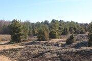 Участок рядом с сосновым лесом