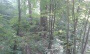 Уникальный лесной участок на берегу в стародачном поселке Мозжинка - Фото 4