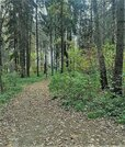 Эксклюзив 15 сот. с лесными деревьями, Ново-Александрово, 7 км от МКАД - Фото 5