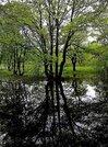 31,5 га кфх в Переславле-Залесском, вблизи д. Потанино - Фото 2