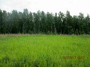 Земельный участок в Долгодеревеском Сосновского района - Фото 4