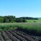 Продаю земельный участок в Шербаши Моргаушского района - Фото 5