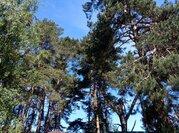 Полность сосновый участок в жилом поселке на Ильинском - Новорижском ш - Фото 5