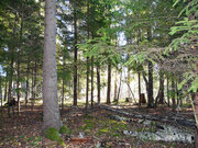 Лесной участок 15 соток на границе леса, Таширово, 60 км. от МКАД - Фото 4