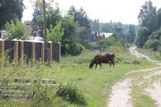 Продам участок в д.Финеево, хорошее место в окружении леса - Фото 2