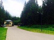 Лесной участок с соснами. 15 соток 6,5млн - Фото 4