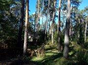 Сосновый участок в стародачном поселке Барвихе Новь - Фото 1