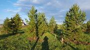 Лесной участок с соснами на Новорижском шоссе в 29 км от МКАД - Фото 2