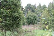 Продается земельный участок 49 соток в деревне Малинники. - Фото 4