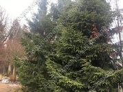 Киевское ш. 34 км от МКАД, Зверево, Дом 200 кв. м - Фото 4