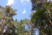 Великолетный сосновый участок в элитном поселке - Фото 4