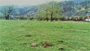 Продажа участка, Элекмонар, Чемальский район - Фото 2