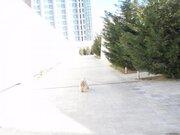 Уникальный комплекс в самом лучшем районе Одессы - в Аркадии., Продажа домов и коттеджей в Одессе, ID объекта - 500460486 - Фото 5