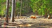 Земельный участок 75 соток (ИЖС) на берегу озера Селигер, Тверская обл - Фото 4