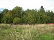 16 сот. в к\п Данилово-3 крайний к лесу. ярославское 37 км. от МКАД - Фото 2