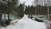 Земельный участок в окружении соснового бора - Фото 3