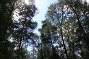 Лесной участок на территории санатория, рядом река, экология, тишина. - Фото 1