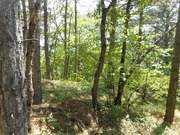Продажа земельного участка в п. Краснокаменка 7 соток в леса. - Фото 1