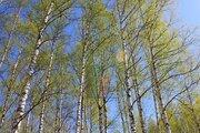 Коттедж 500 м в 10 км от МКАД, Коргашино, рядом Клязьма и пруд, ИЖС - Фото 5