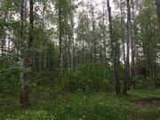 Участок, 12,5 соток с лесом, ИЖС, д. Панино Чеховский район - Фото 3