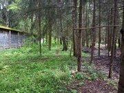 Эксклюзив 15 сот. с лесными деревьями, Ново-Александрово, 7 км от МКАД - Фото 4