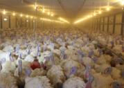 Продам птицефабрику Индейка тер 1 га в городе Михайловске - Фото 5
