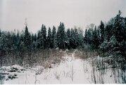 Участок 15 соток с лесными деревьями. Дарна - Фото 4