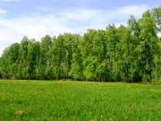 Алтай, Первомайский район, п.Лесной - Фото 2