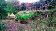 2 100 000 Руб., 35 кв.м, свет, вода, солничный участок, Дачи в Сочи, ID объекта - 503115168 - Фото 16