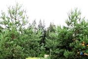 20 соток у леса, газ, охрана., Земельные участки в Кубинке, ID объекта - 201355208 - Фото 13