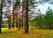 Судогодский р-он, Чамерево с, земля на продажу - Фото 1