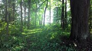 Продается большой земельный участок в д.Старо Рузский район - Фото 3