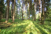 Продаю лесной участок