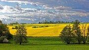 Земельные участки в Владимирской области