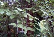 Продается участок. , Подольск город,, Земельные участки в Подольске, ID объекта - 201571036 - Фото 6