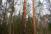 Квартира в лесу, Купить квартиру в новостройке от застройщика Усово, Одинцовский район, ID объекта - 319152236 - Фото 4