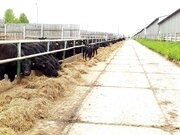 Животноводческий комплекс от собственника, Готовый бизнес в Твери, ID объекта - 100059287 - Фото 9