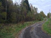 Продаются участки в лесу, 200 соток. Московская область, Можайский рай - Фото 3