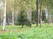 """Земельный участок СНТ """"Лесной воздух"""" - Фото 3"""