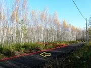 Участок 9,5 соток с молодым лесом, ПМЖ, эл-во 15 квт, дер. Таширово. - Фото 3