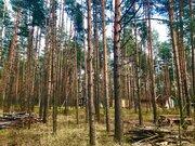 Лесной участок 6 соток дер. Устиновка ИЖС Сосны Ели