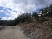 Продается недорогой участок в поселке Кацивели в окружении леса - Фото 4