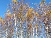 Участок 14 сот на лесной поляне, Таширово, ул. Лесная - Фото 5