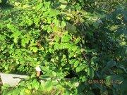 Дача в 5 км от города , баня, домик,10 соток, Продажа домов и коттеджей в Кемерово, ID объекта - 503030898 - Фото 16