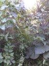 Свободный участок в Деревне Рузино в 500 метрах от Москвы (Зеленоград) - Фото 1