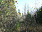 Лесной участок 15 соток на границе леса, Таширово, 60 км. от МКАД - Фото 5